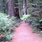 """Love Story"" Ceremonies in the Redwoods with RomanticVows.com"